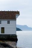 Pássaros de Noruega Imagens de Stock Royalty Free