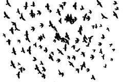 Pássaros de Odin que voam através do céu, um rebanho das gralhas em um fundo branco foto de stock