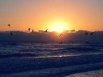 Pássaros de paraíso Imagem de Stock Royalty Free