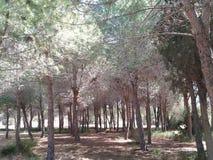 Pássaros de passeio do equilíbrio da paz da natureza da floresta das árvores Foto de Stock Royalty Free