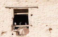 Pássaros de Pigenon no assento em uma janela Imagens de Stock Royalty Free