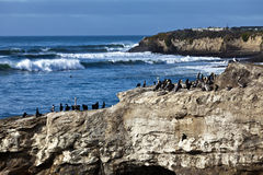 Pássaros de Santa Cruz Imagem de Stock Royalty Free