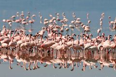 Pássaros de Tanzânia Imagens de Stock Royalty Free