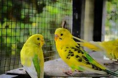 pássaros de um par Imagem de Stock