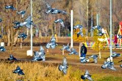 Pássaros de voo imagens de stock