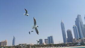 Pássaros de voo Imagem de Stock Royalty Free