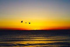 Pássaros de voo com nascer do sol no platô de Tibet do lago Qinghai Imagens de Stock Royalty Free