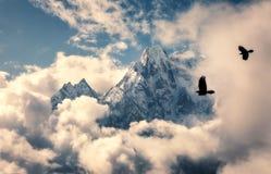 Pássaros de voo contra a montanha com pico nevado nas nuvens Fotografia de Stock Royalty Free