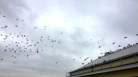Pássaros de voo no céu nebuloso fotografia de stock royalty free