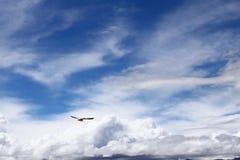Pássaros de voo no platô de Tibet do lago Namsto Foto de Stock Royalty Free