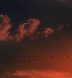 Pássaros de voo no por do sol Fotografia de Stock