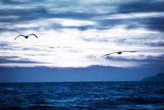 Pássaros de voo sobre o mar fotografia de stock royalty free