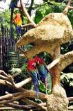Pássaros do amor Fotografia de Stock Royalty Free