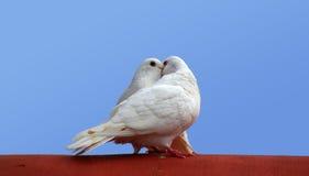 Pássaros do amor Fotos de Stock Royalty Free
