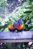 Pássaros do amor e uma árvore fotos de stock