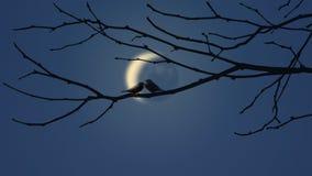 Pássaros do amor e uma árvore Foto de Stock Royalty Free