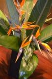 Pássaros do arranjo de flor do paraíso imagens de stock