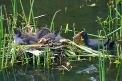 Pássaros do assentamento fotos de stock royalty free