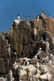Pássaros do assentamento Imagens de Stock