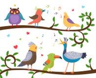 Pássaros do canto em ramos de árvore Fotos de Stock Royalty Free