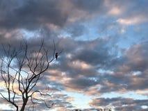Pássaros do dia chuvoso imagens de stock