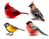 Pássaros do inverno ajustados ilustração royalty free