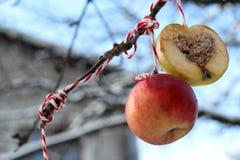 Pássaros do jardim da alimentação de inverno Imagem de Stock