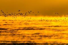 Pássaros do nascer do sol Foto de Stock Royalty Free
