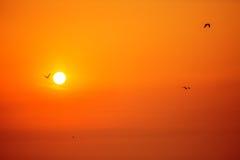 Pássaros do nascer do sol e de voo da manhã Fotos de Stock Royalty Free