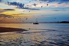 Pássaros do nascer do sol e o barco do pescador Fotografia de Stock