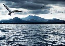 Pássaros do oceano Fotografia de Stock