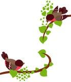 Pássaros do pisco de peito vermelho em filiais da mola da árvore Imagem de Stock