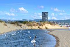 Pássaros do rio da praia Imagens de Stock Royalty Free