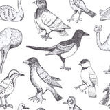 Pássaros do vetor da tração da mão ilustração do vetor