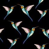 Pássaros do zumbido Teste padrão sem emenda do pássaro tropical exótico do zumbido Ilustração desenhada mão ilustração royalty free