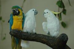 Pássaros dos animais selvagens Imagens de Stock