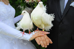 Pássaros dos casamentos Fotografia de Stock Royalty Free