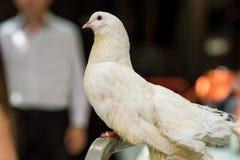 Pássaros dos casamentos Imagem de Stock