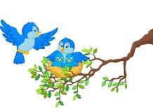 Pássaros dos desenhos animados com seus dois bebês no ninho Imagens de Stock Royalty Free