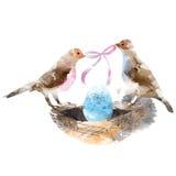 Pássaros dos pares em um ninho com ovos Imagens de Stock Royalty Free