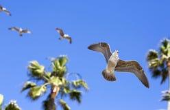 Pássaros durante o voo Foto de Stock Royalty Free