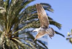 Pássaros durante o voo Imagem de Stock Royalty Free