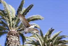 Pássaros durante o voo Fotografia de Stock Royalty Free