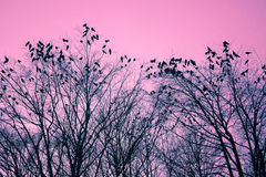 Pássaros e árvores Fotos de Stock Royalty Free