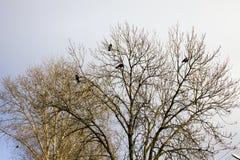 Pássaros e árvores Imagens de Stock