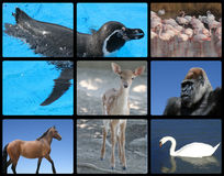 Pássaros e animais doces Fotos de Stock Royalty Free