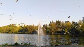 Pássaros e fonte no lago em Duvbo, Sundbyberg, Éstocolmo, Suécia imagem de stock royalty free