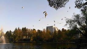 Pássaros e fonte no lago em Sundbyberg, Éstocolmo, Suécia imagem de stock