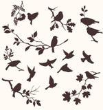 Pássaros e galhos Fotos de Stock