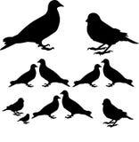 Pássaros e natureza ilustração royalty free